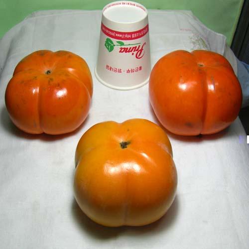 차량단감 열매