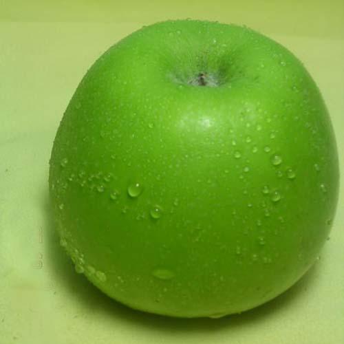 아오리 열매