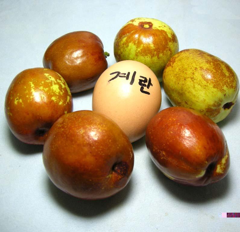 열매 비교모습