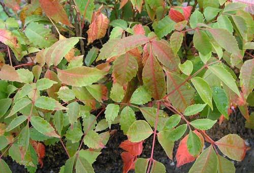 여름 잎모습