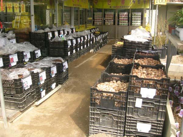 각종 품종 전시판매 모습