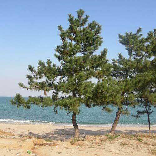 바닷가 식재모습