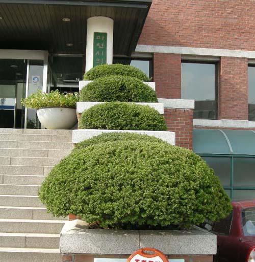 건물앞 조경된모습