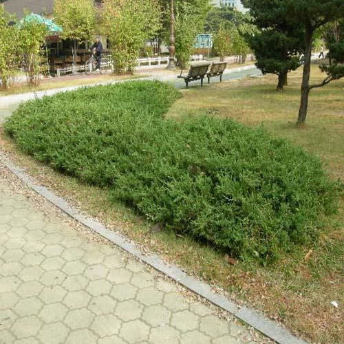 공원 조경모습