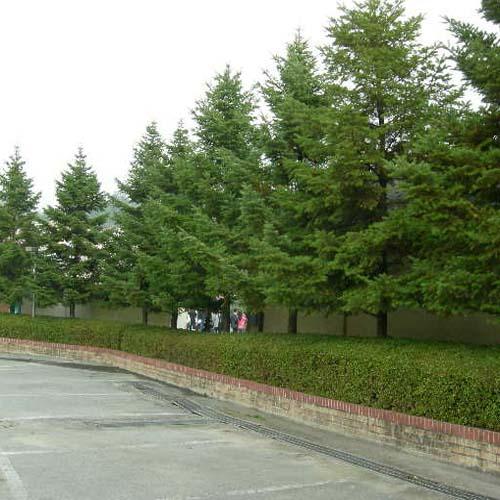 공원변 식재모습