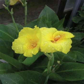 노랑꽃 개화모습