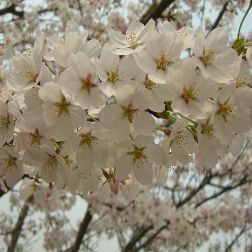 꽃의 만개 근접모습