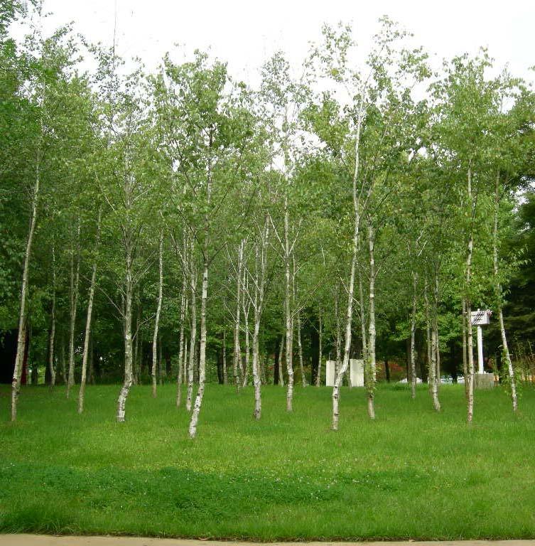 산림 생육모습