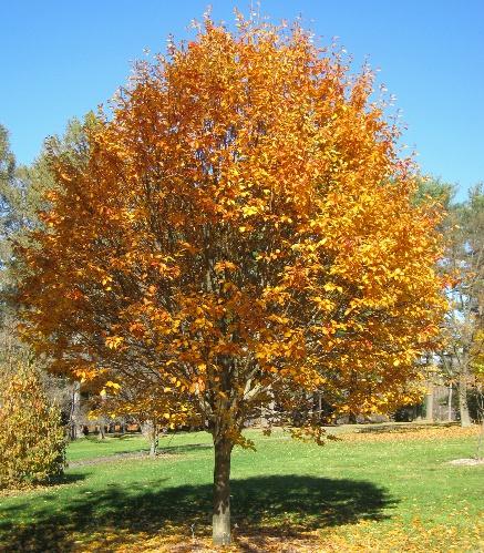 성목 가을단풍