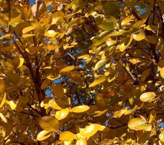 가을 단풍모습