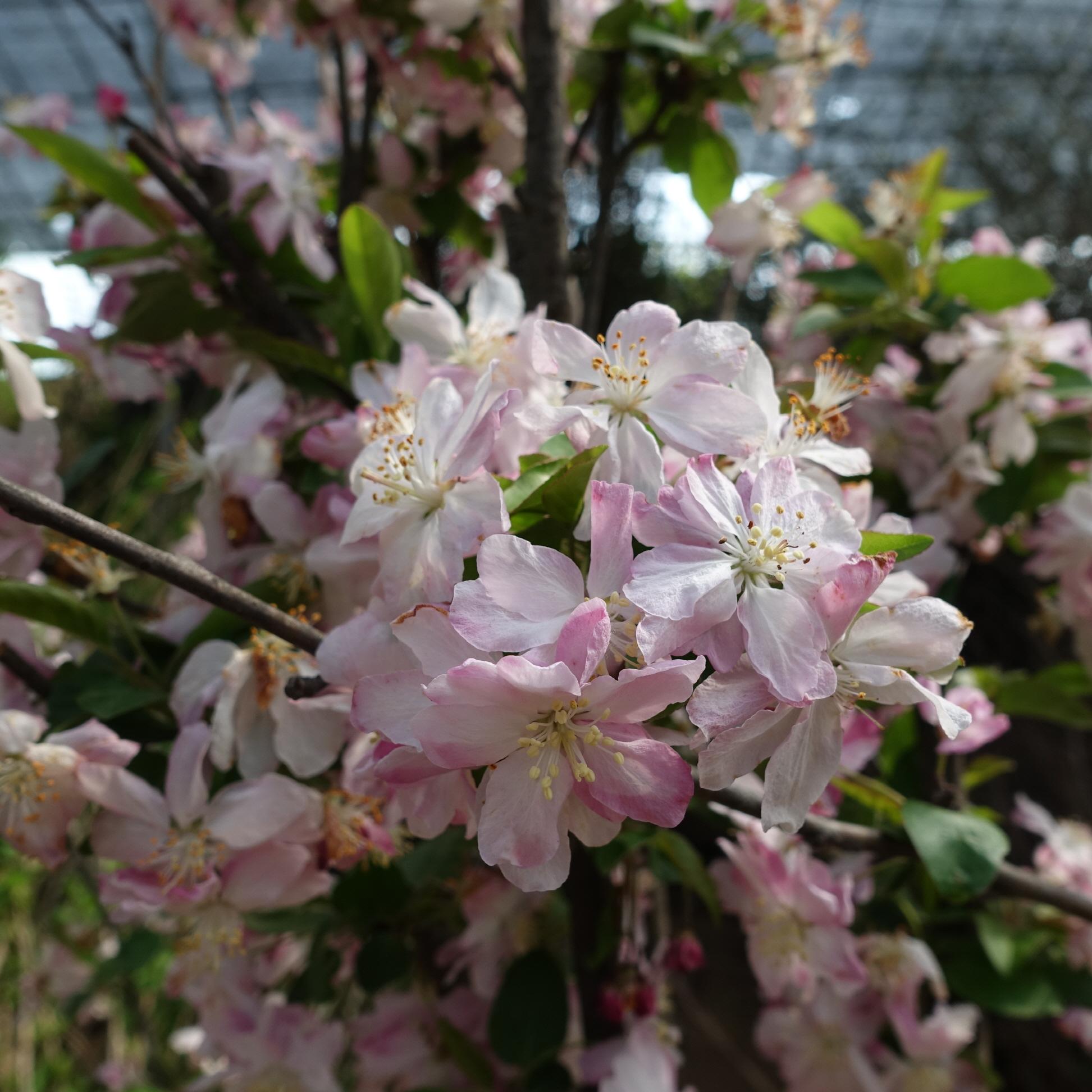 봄의 개화모습