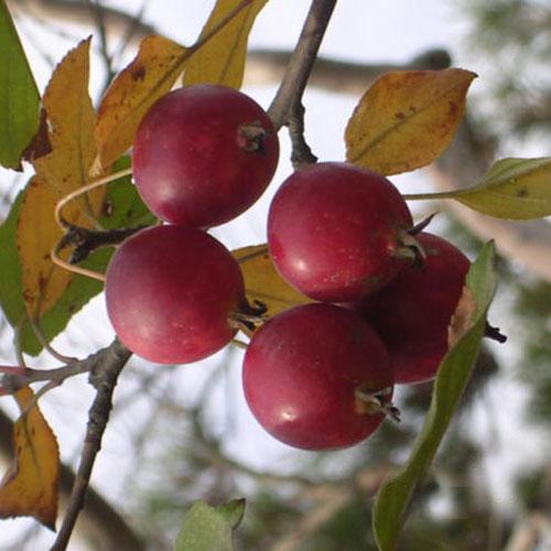 열매 가을모습