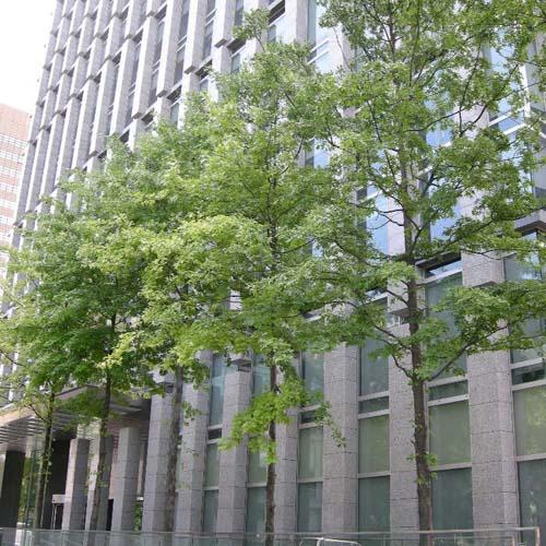 건물앞 식재모습(여름)
