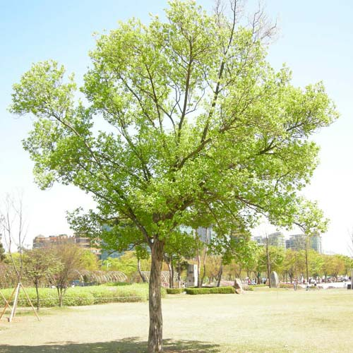 공원에 식재된모습