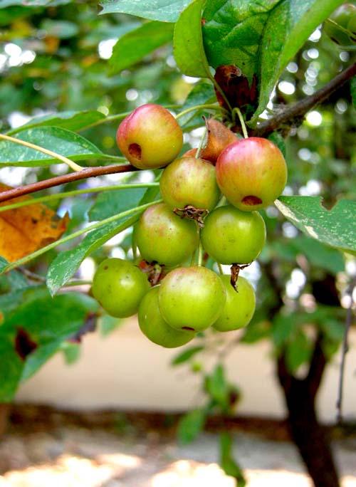 가을 열매 달린모습