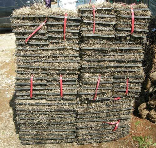 잔디 열결포트 모습