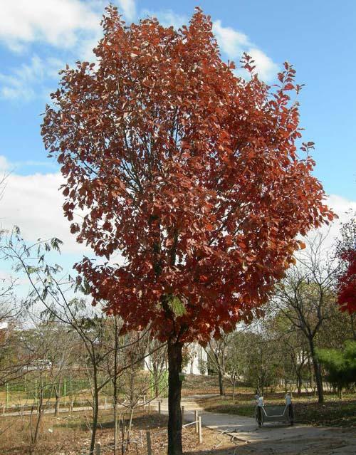 가을단풍모습