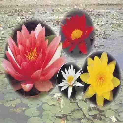 다양한 꽃색