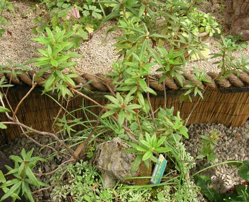 수목원 식재 모습