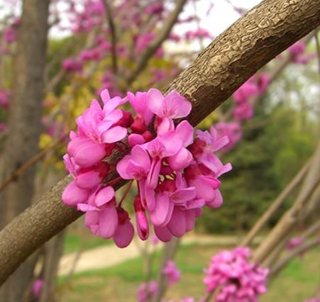 꽃 근접모습