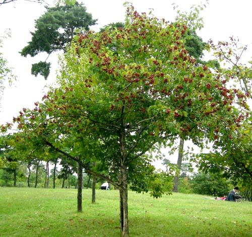 가을열매모습