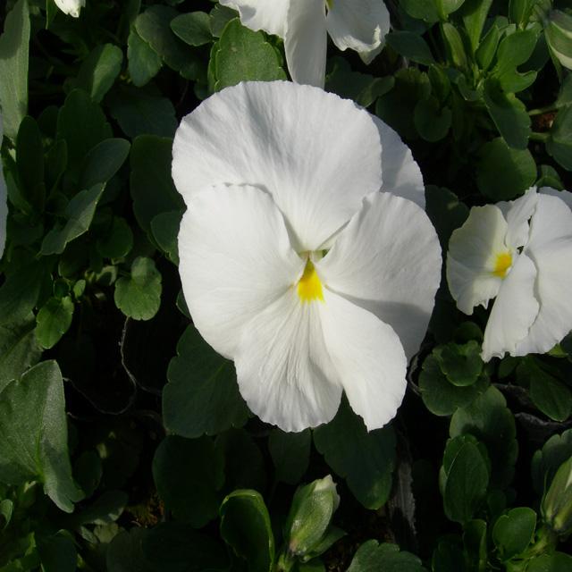 포트모습(흰색)