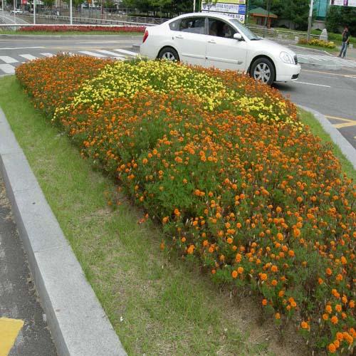 화단(주황색, 황색)모습
