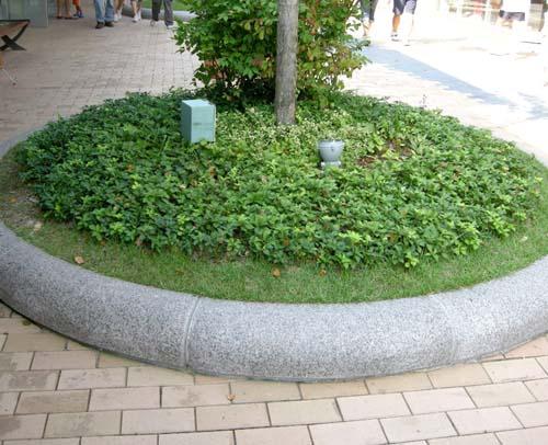 나무밑 군식모습