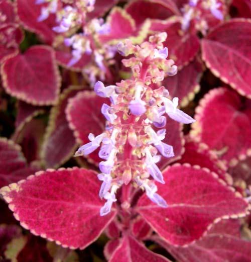 잎과 꽃 모습
