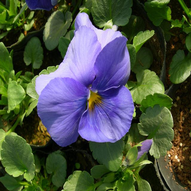 포트모습(보라색)