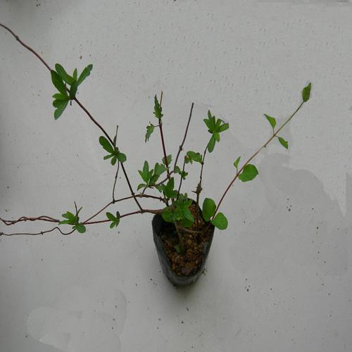 인동초 포트 모습