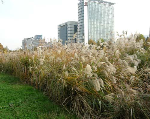 가을모습(도심내공원)