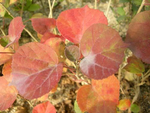 가을 잎 모습