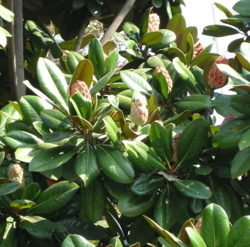 잎과 열매달린 모습