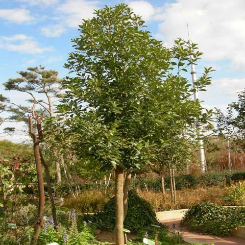 수목원 생육모습