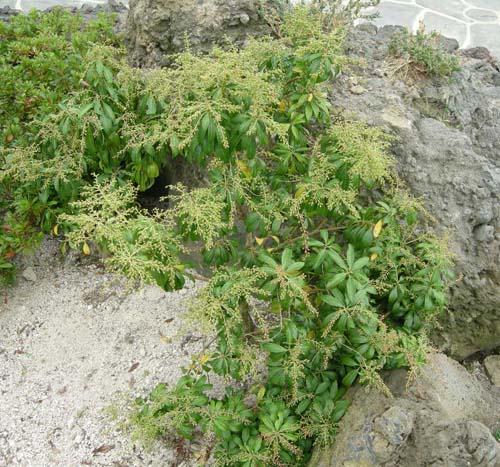 바위 주변 식재모습