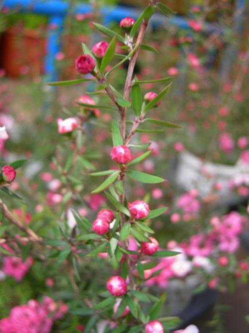 꽃 봉우리 모습