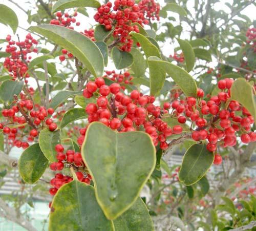 겨울 열매 모습