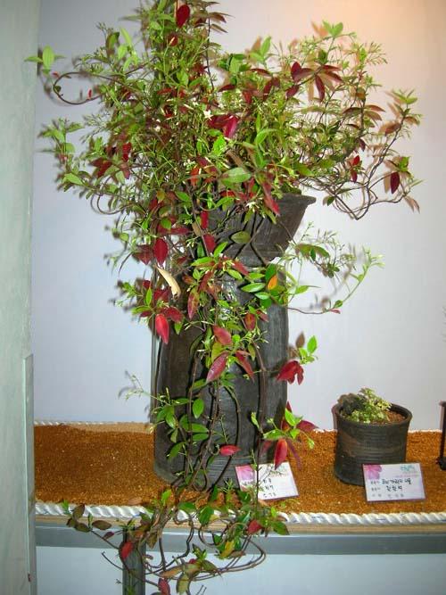 화분 식재모습(가을)