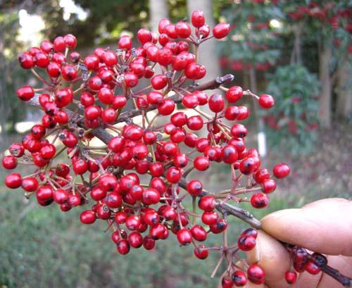 열매 모습