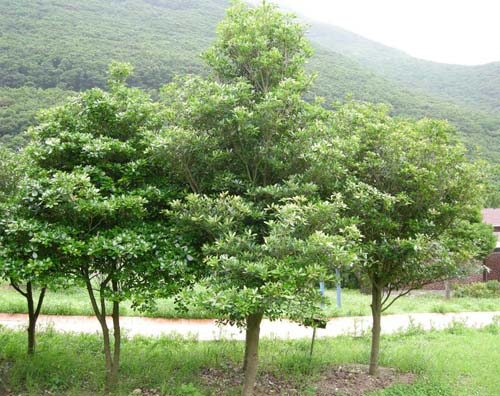 수목원 군식모습