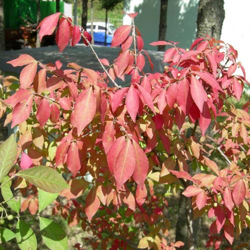 가을단풍잎 모습