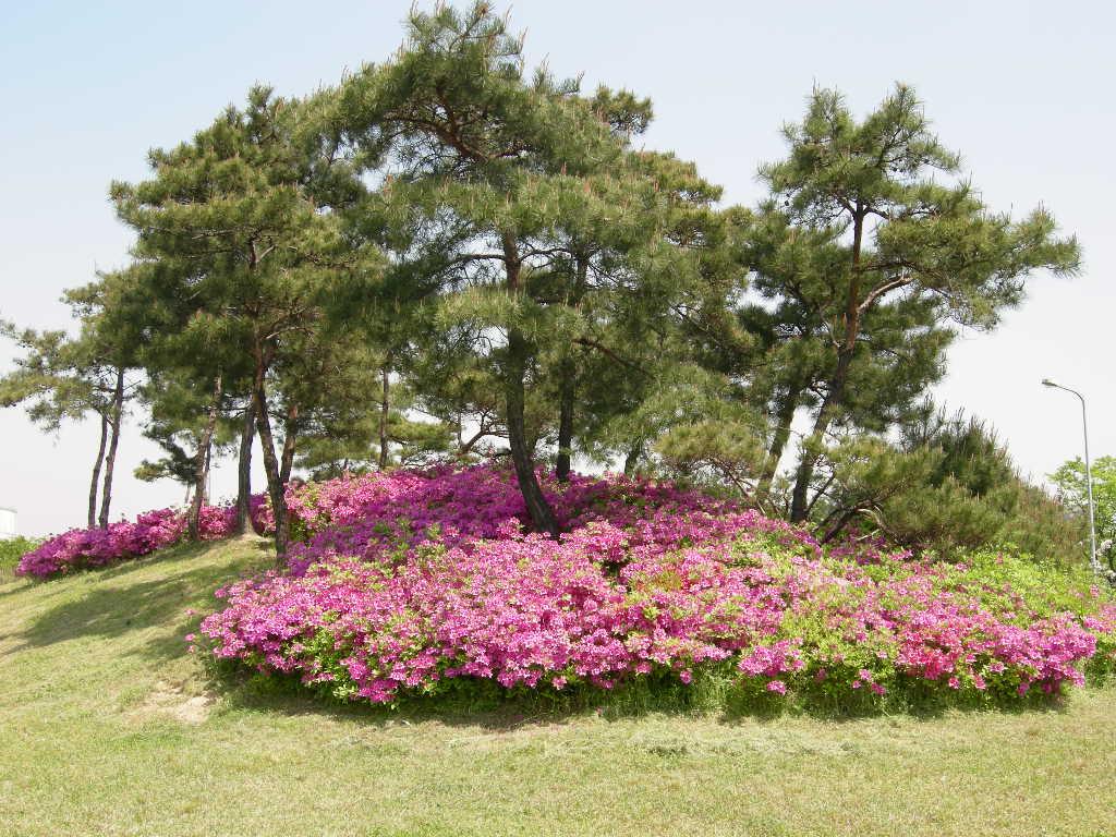공원나무 밑 식재모습