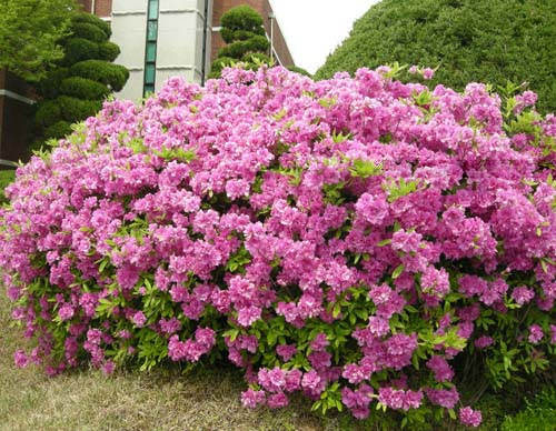봄 개화모습