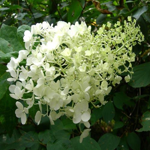 꽃 근접모습(여름)
