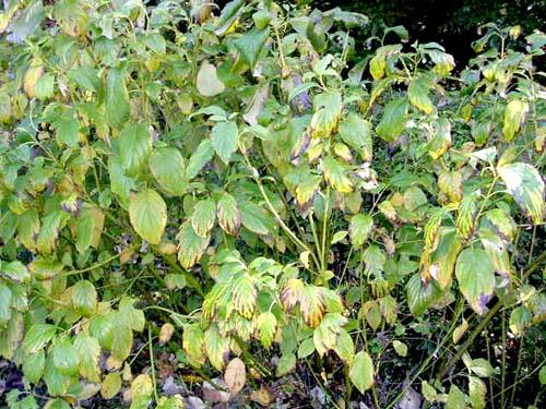 노랑말채 수목원 군식모습