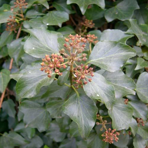 잎과 열매 익어가는 모습