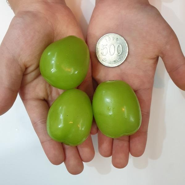 열매vs동전 비교사진